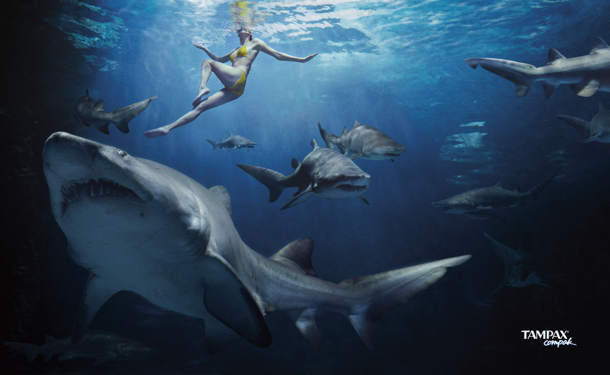 fond-new-requin