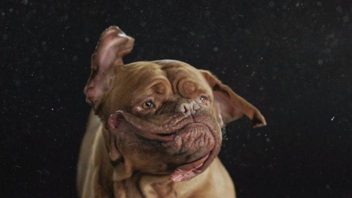 Dog Shake
