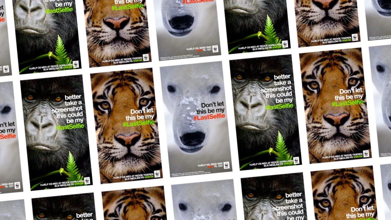 last-selfie-WWF