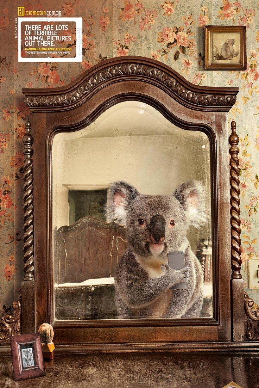 coala-nat-geo-selfie