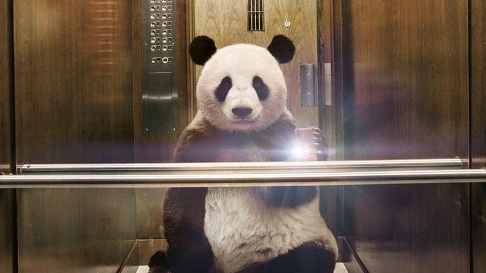 panda-selfie-960