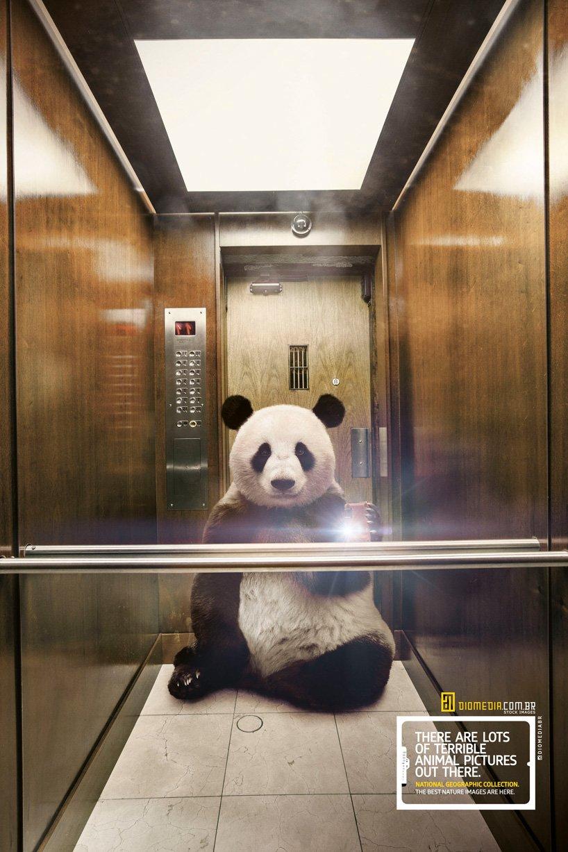 panda-selfie