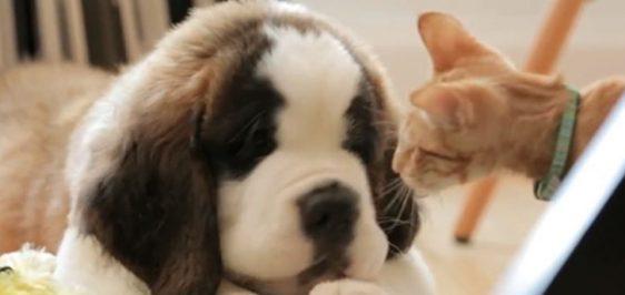 dear-kitten-regarding-the-dog