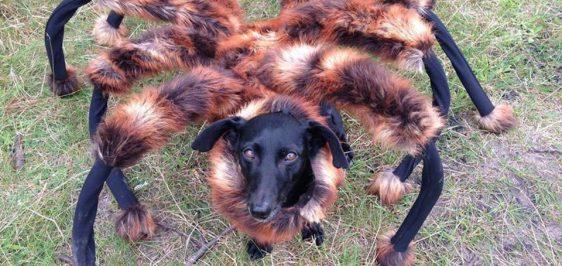 mutant-giant-spider-dog-video-mais-visto-youtube