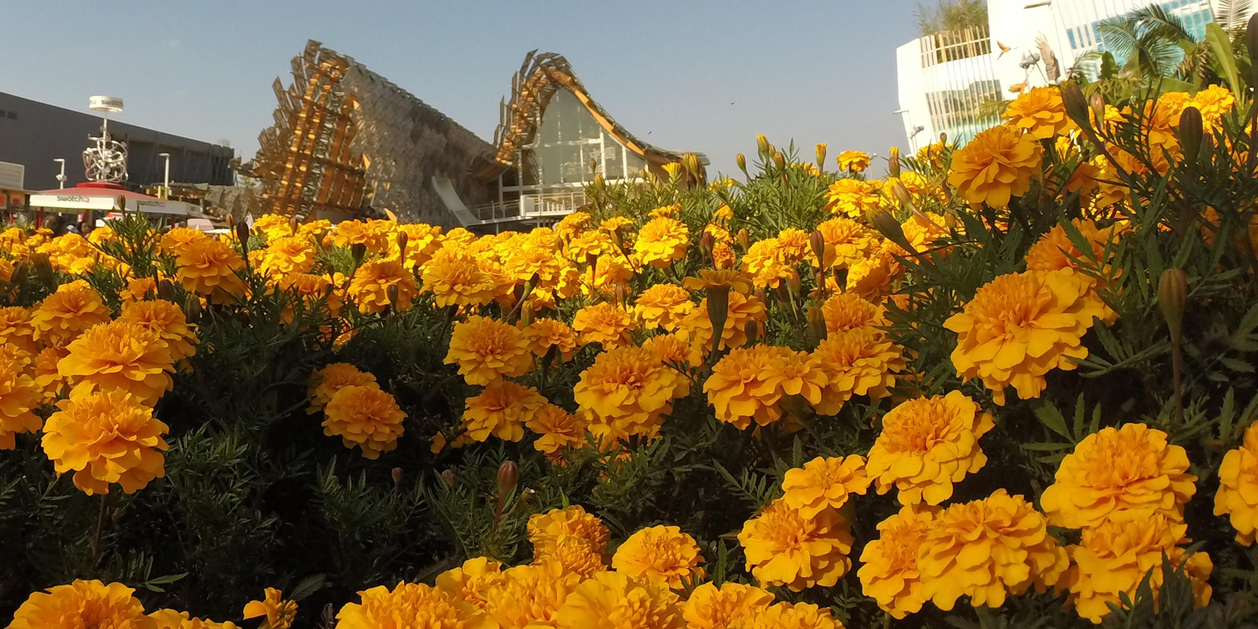 china_flores