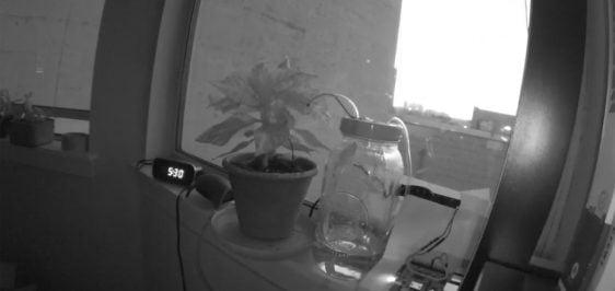 reddit-planta