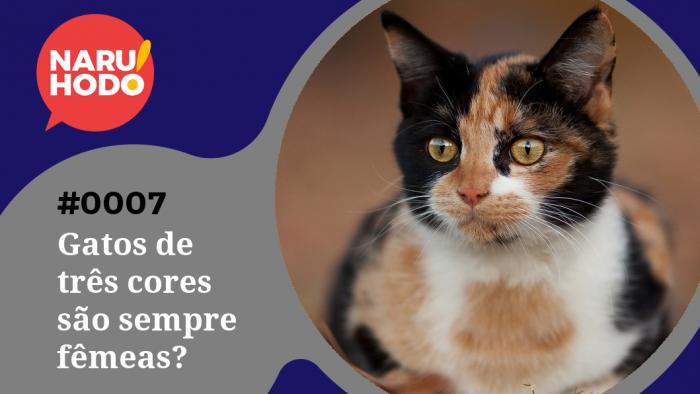 Naruhodo! #7 – Gatos de três cores são sempre fêmeas?