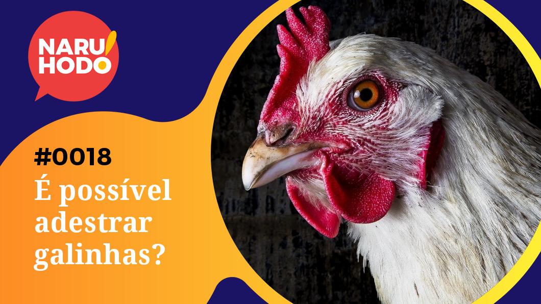 Capa - possível adestrar galinhas?