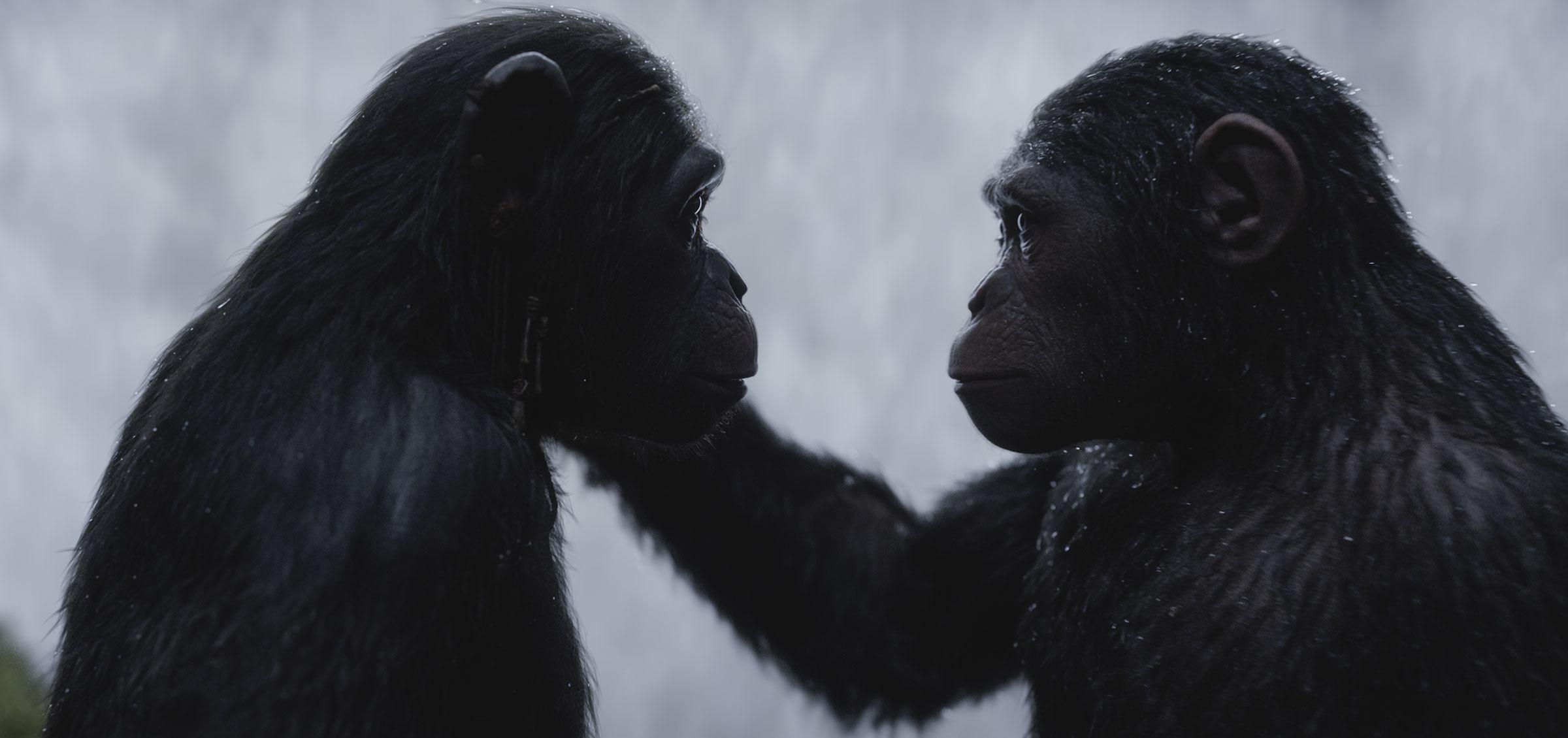 Planeta Dos Macacos A Guerra é O Melhor Desfecho Possível