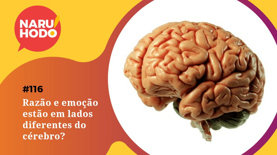 Capa - Razão e emoção estão em lados diferentes do cérebro?