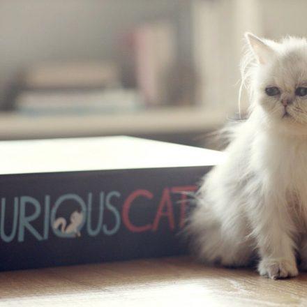 Whiskas-livro-para-gatos