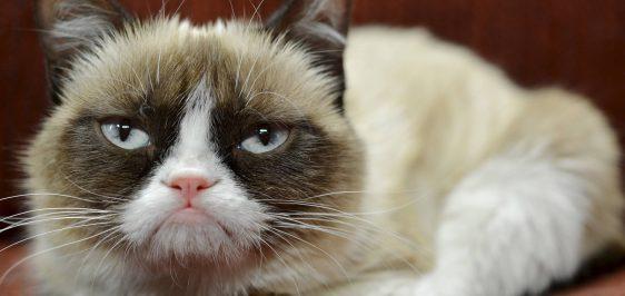 alx_economia-grumpy-cat-20141208-004_original1-e1558092713252