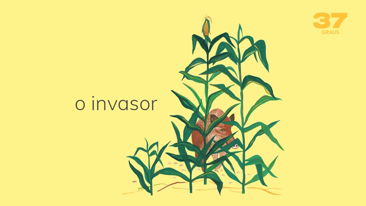 37 Graus – O invasor