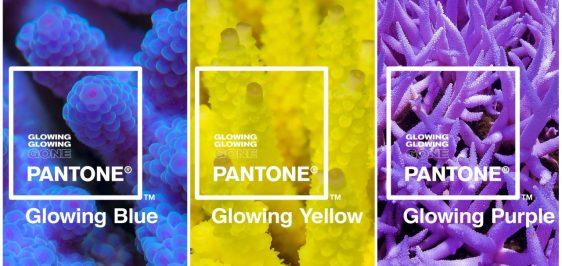 Pantone-Adobe-Corais-Paleta