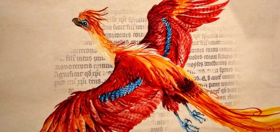 fawkes harry potter