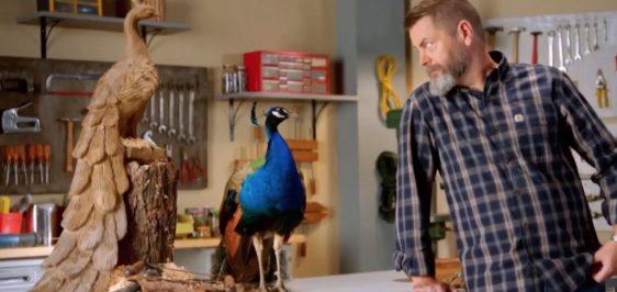 peacockad