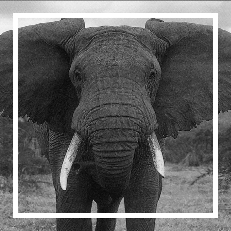 Capa - O Elefante na Sala