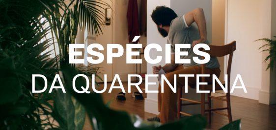 amstel-especies-quarentena