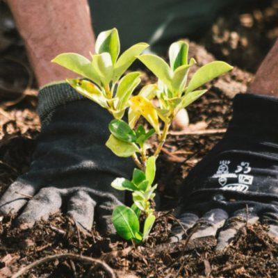 floresta-esperança-nova-zelandia