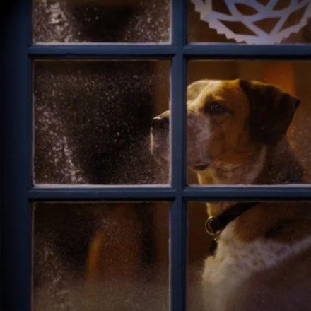 rufusdog