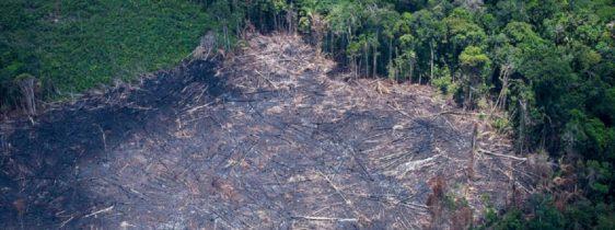 desmatamento-brasil