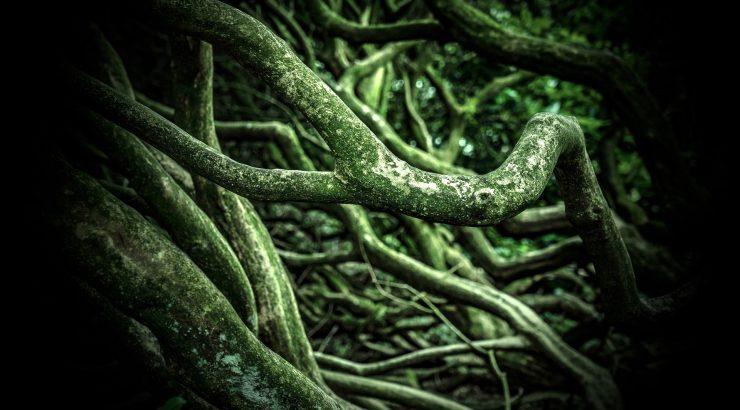 Escafandro – A Wikipédia e a inteligência das plantas
