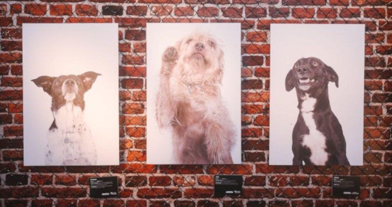 Lagunitas lança iniciativa para ajudar cães perdidos a voltarem para seus donos
